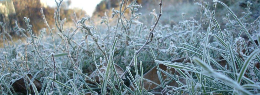 На Львівщині очікують заморозків