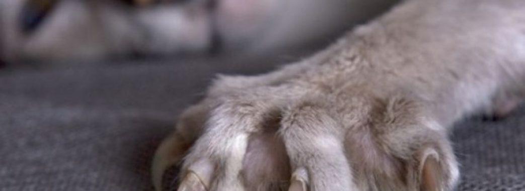 На Яворівщині скажений кіт накинувся на чотирьох людей