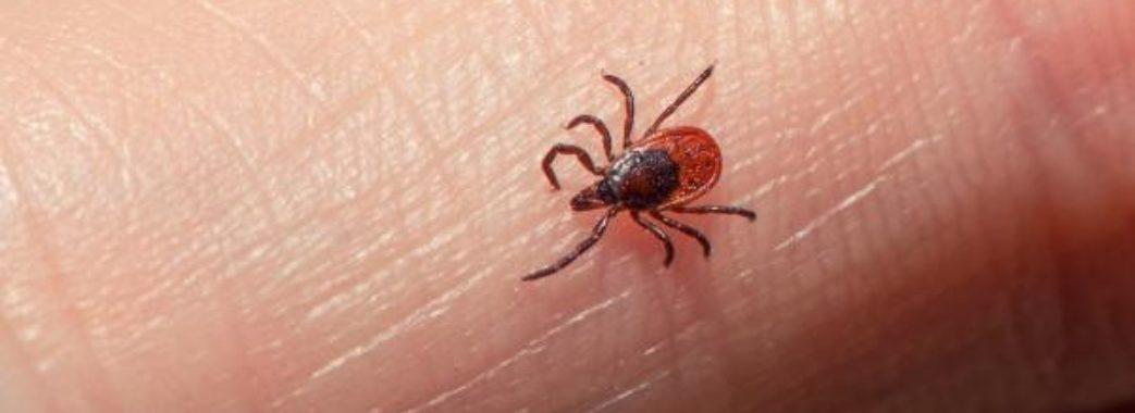 Через укуси кліщів захворіли 15 мешканців області: серед них двоє дітей