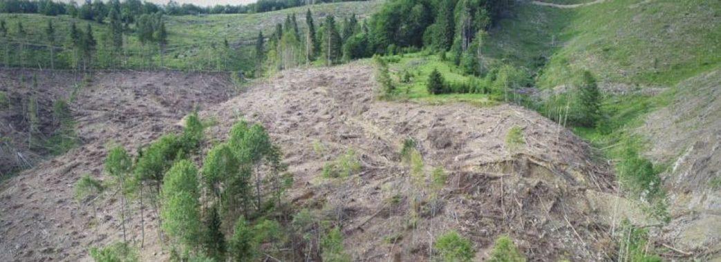 «Ця інформація подається, аби прикрасити статистику»: юрист про незаконні вирубки на Старосамбірщині