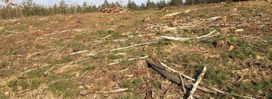 Через 10 років від лісів на Старосамбірщині може нічого не залишитися