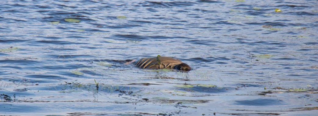 У водоймі біля Добротвору знайшли тіло людини