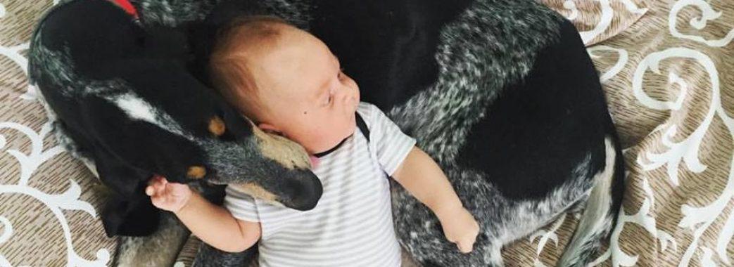 «Спеціально вистрілив і поїхав додому»: на Перемишлянщині браконьєр розстріляв породистого собаку