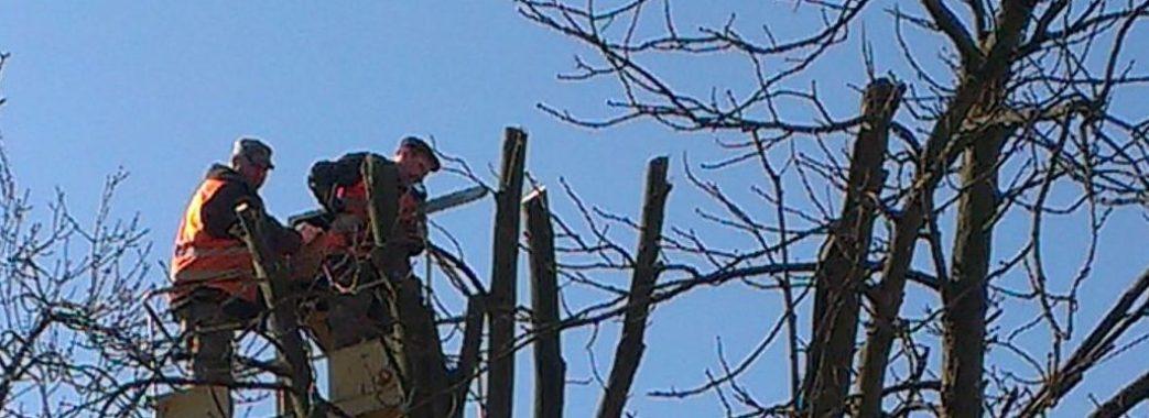 У Львові поки не обрізуватимуть дерева