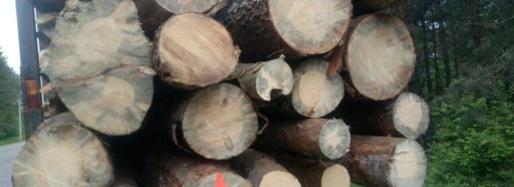 На Яворівщині поліція затримала вантажівку з незаконною сосною