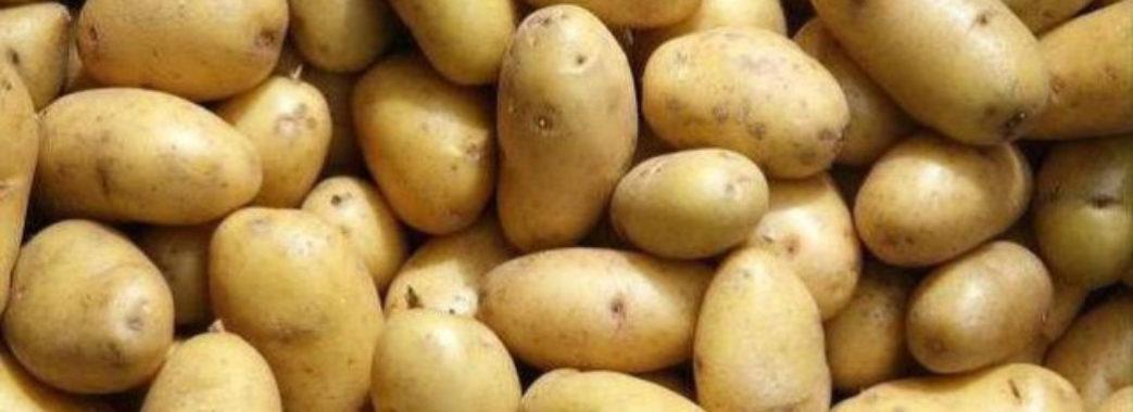 На Львівщині найбільший обсяг виробництва картоплі
