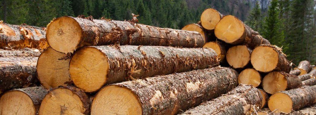 Тепер за шість незаконно зрубаних дерев можна потрапити під суд