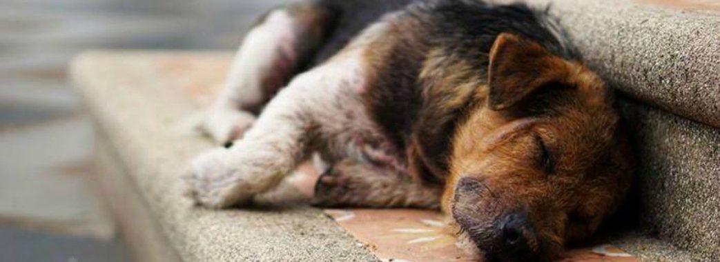 Петиція про пункти обігріву для львівських безпритульних тварин набрала пів тисячі голосів