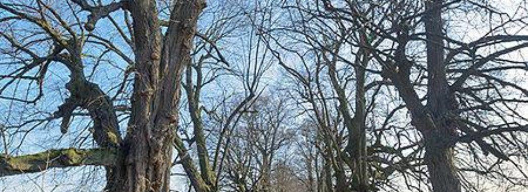Пам'ятку природи на Бущині закидали сміттям