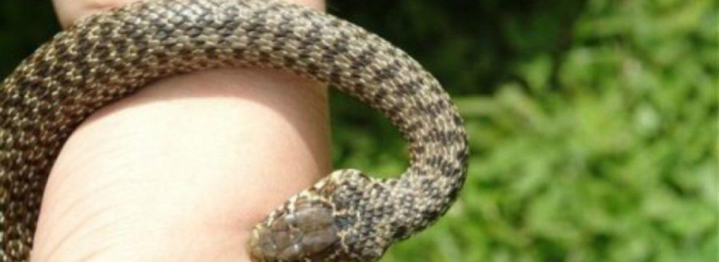 «Батьки шукали порятунку по бабках»: 9-річну дівчинку на Турківщині вкусила змія
