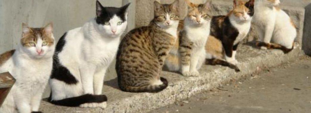 У Львові за допомогою мобільного додатка порахують вуличних котів
