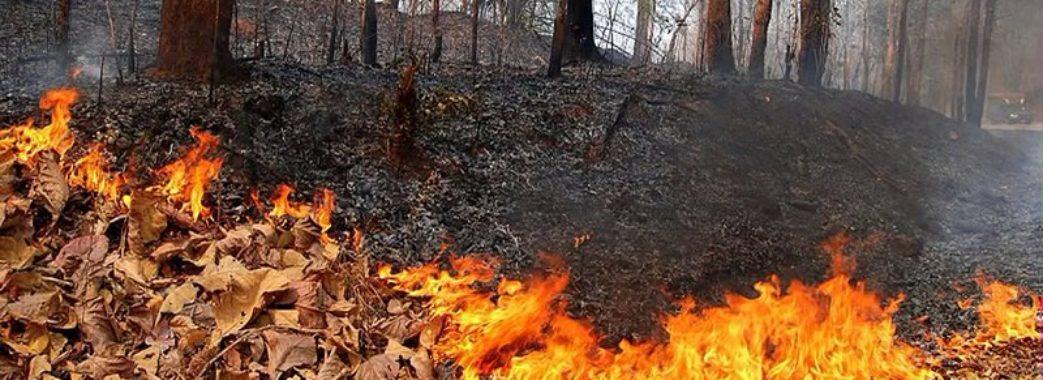 Міністерство Супрун хоче врегулювати питання сміття, паління листя та «обрізання» дерев