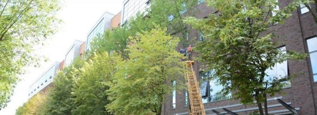 У Львові забудовник зрізає рідкісні дерева