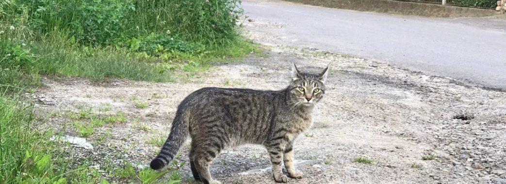 Стало відомо, скільки у Львові вуличних котів