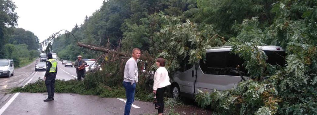 Дорогою до Польщі на три автівки впало дерево (відео)
