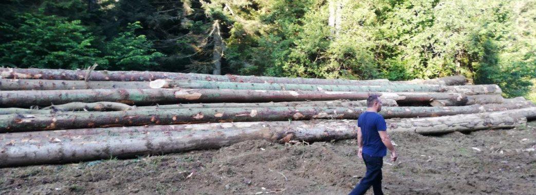 На Старосамбірщині знову без дозволів ріжуть ліс