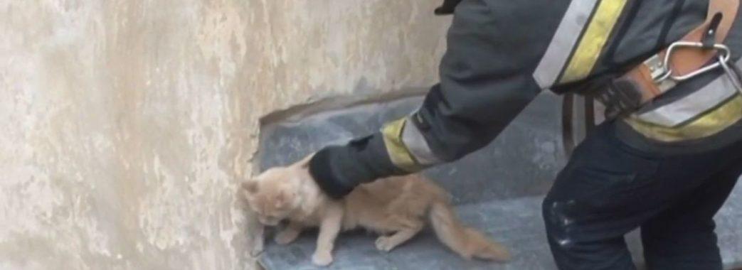 Дев'ятеро львівських рятувальників знімали кота з висоти