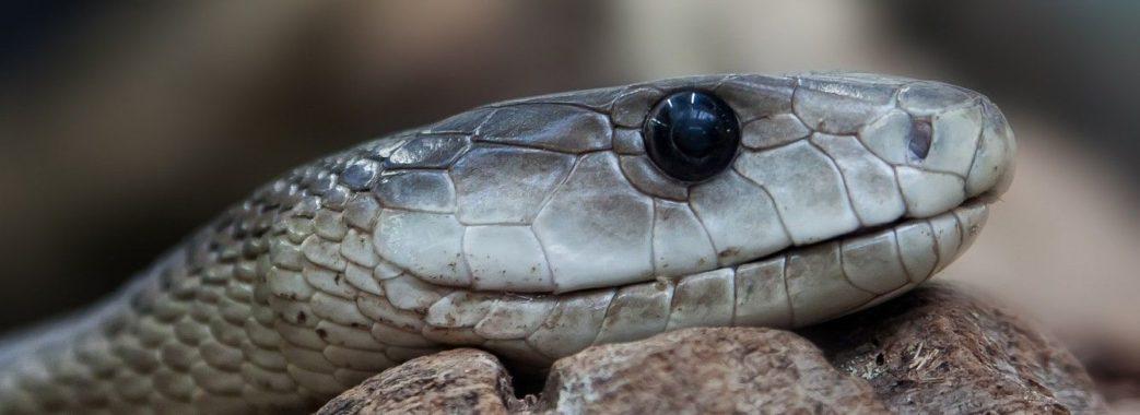На Дрогобиччині та Сколівщині чоловіки потрапили до реанімації через укуси змій