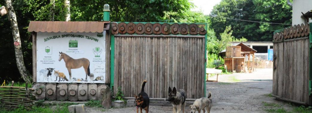 """""""Домівка врятованих тварин"""" просить львів'ян про допомогу"""