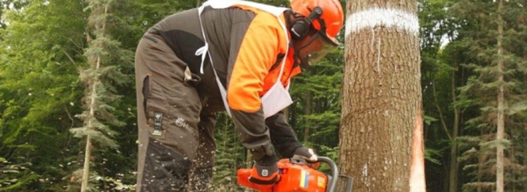 «Дерева ріжуться, а грошей нема»: працівники лісгоспів півроку не отримують зарплати
