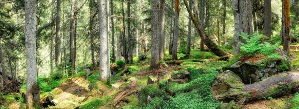 На Дрогобиччині заборонили рубки лісу без попередніх громадських слухань