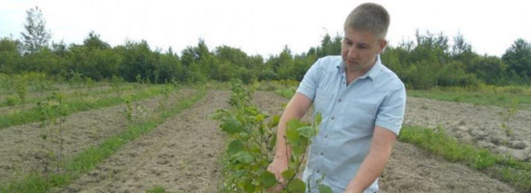 На Пустомитівщині молодий адвокат взявся за вирощування горіхів