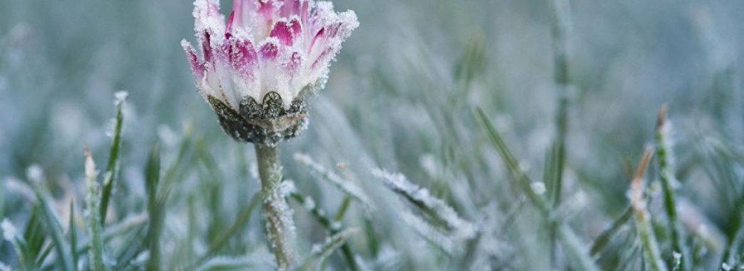 Синоптики прогнозують заморозки