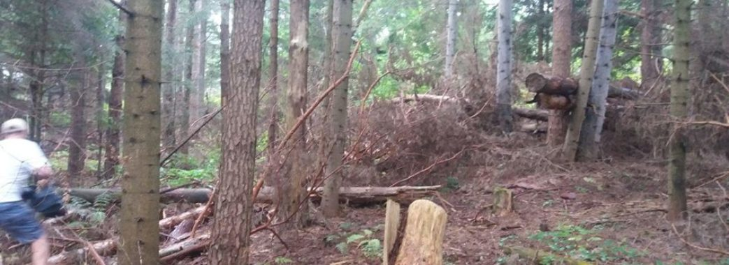 Активісти на Старосамбірщині впіймали ще один лісовоз з незаконно зрубаною деревиною