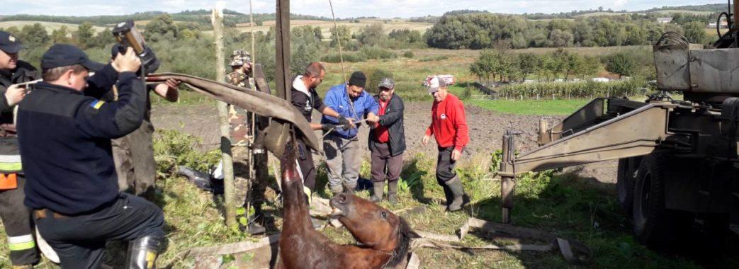 На Мостищині три години рятувальники витягали коня з 8-метрового колодязя