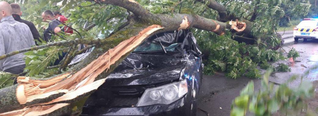 «Нема людини, якій би він відмовив в допомозі»: житель Миколаївщини загинув через дерево