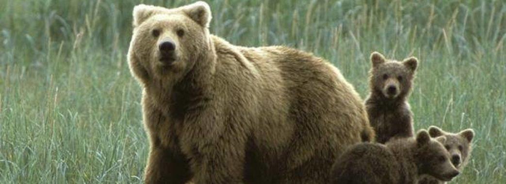 Житель Старого Самбора зустрів у лісі ведмедя