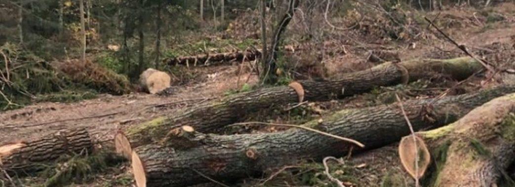 Нардепи заборонили суцільну рубку лісів у Карпатах