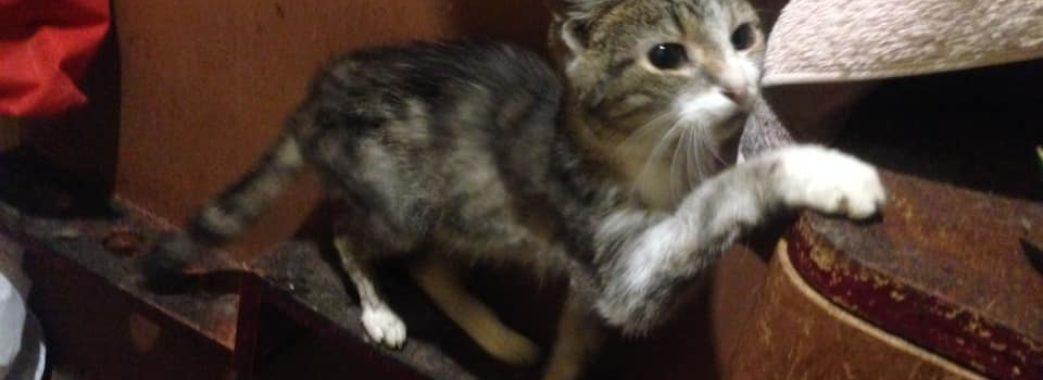 Сорок котів чотири дні були у квартирі з померлою господинею