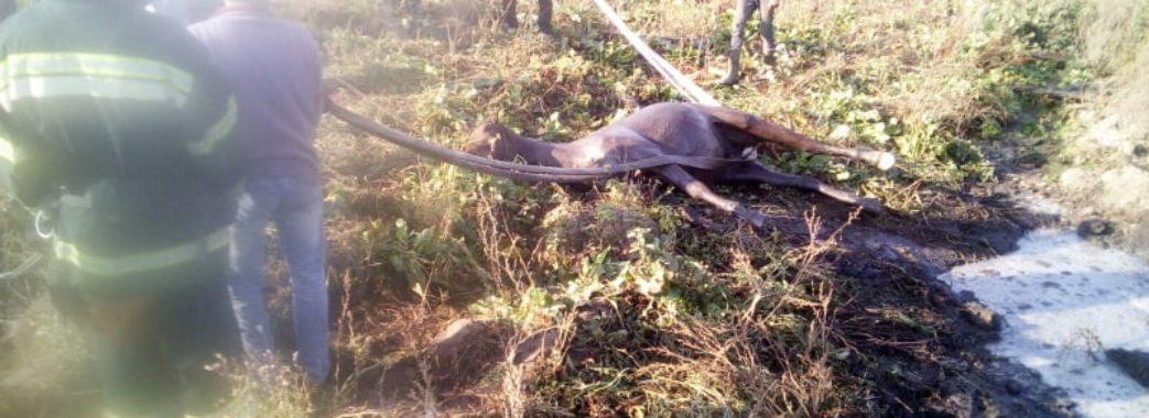 На Пустомитівщині кінь провалився у 8-метрову яму