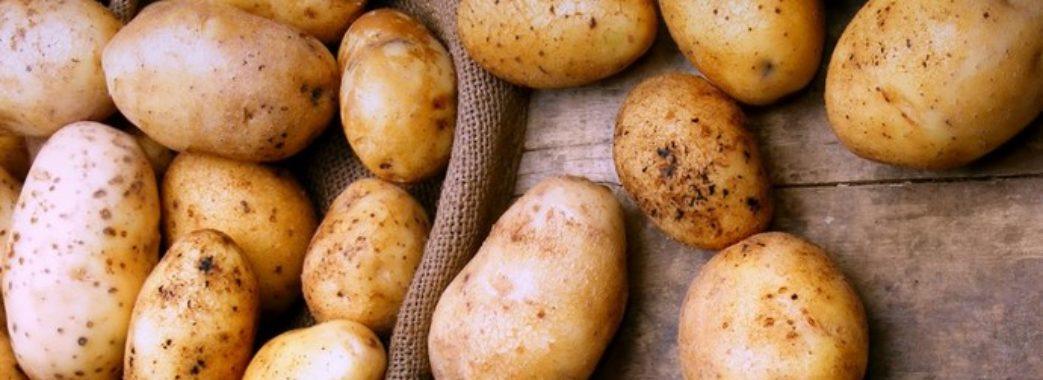 На українських ринках подешевшала картопля
