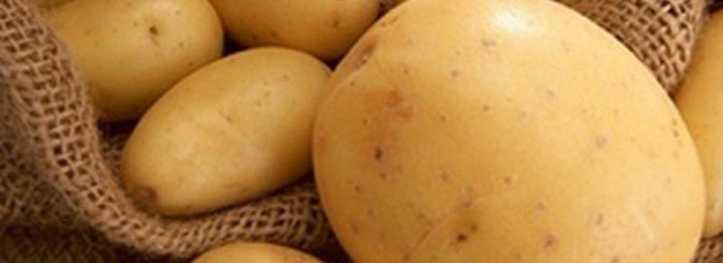 Картопля подорожчає утричі – прогноз