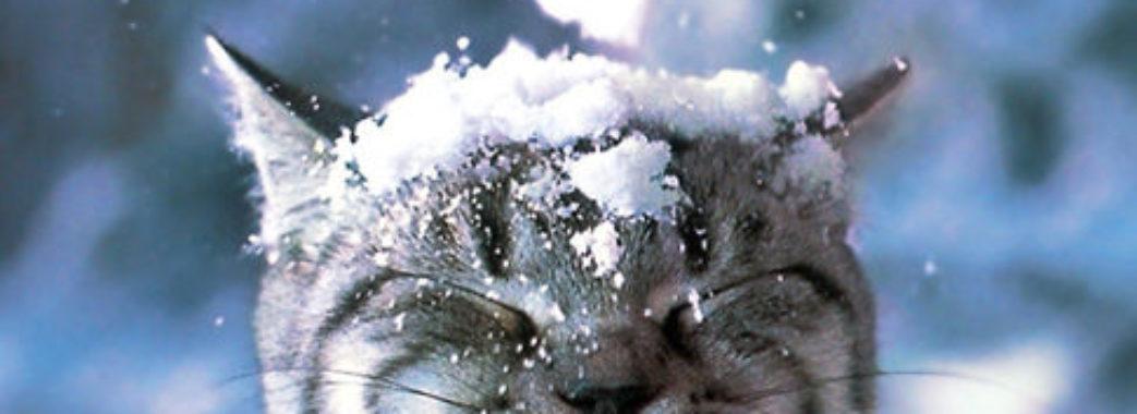 Синоптики прогнозують завтра перший сніг