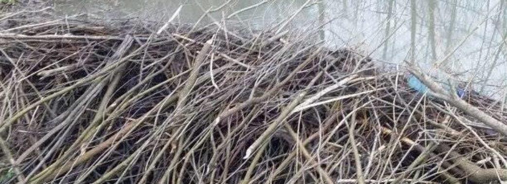 Бобри збудували триметрову греблю у Миколаївському районі: підтопило будинки