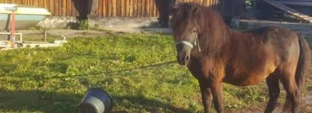 «Хочуть здати на м'ясо»: львівський зоозахисник просить врятувати поні