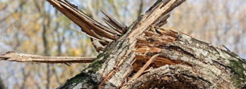На Золочівщині дерево розчавило чоловіка