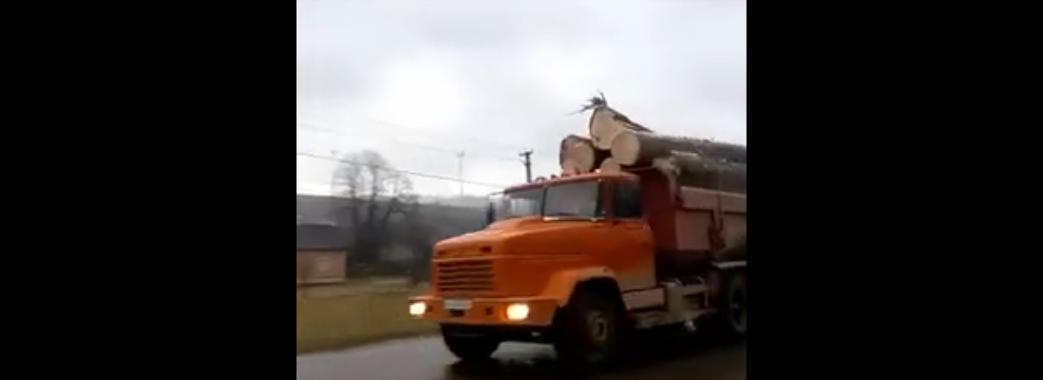 На Старосамбірщині зафіксували нову техніку, яка вивозить крадений ліс (ВІДЕО)