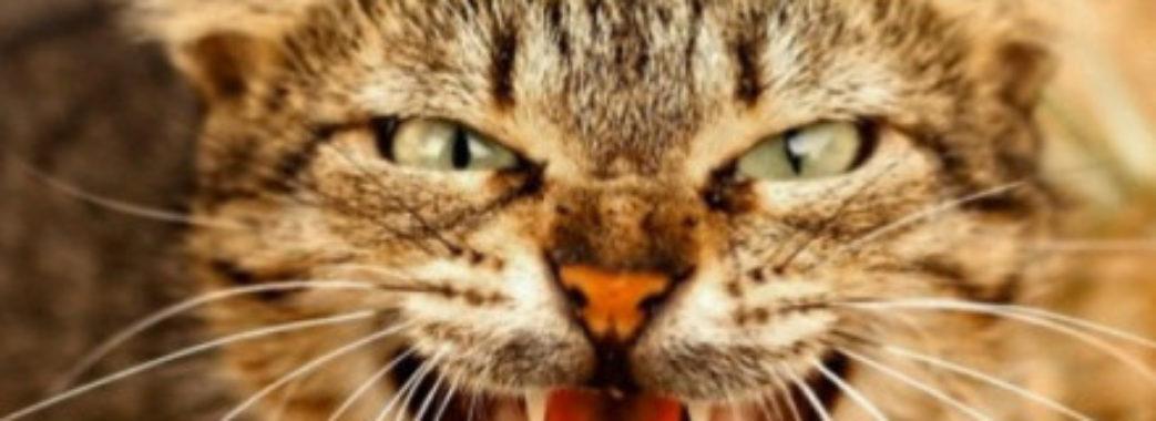 Троє дорослих чоловіків опинилося в лікарні через кота