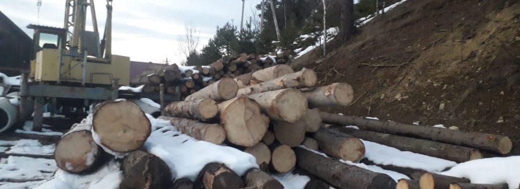 На Сколівщині поліцейські виявили десятки незаконно зрубаних  смерек