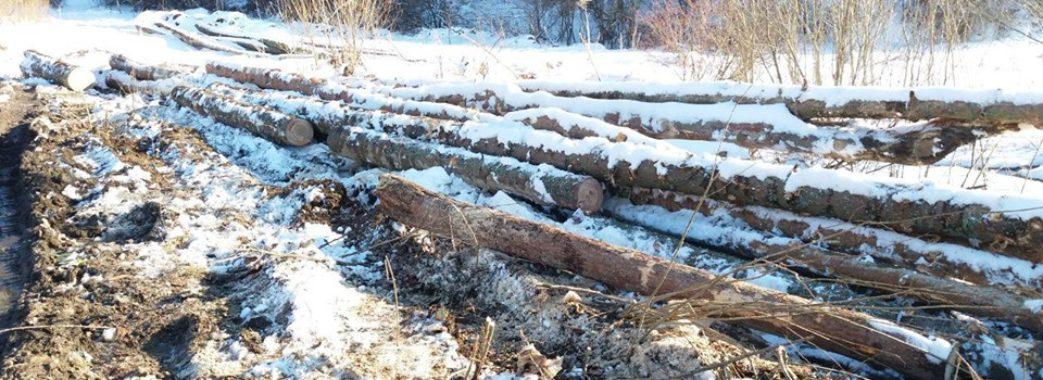 «Мусять виконувати «план»: на Старосамбірщині продовжуються незаконні вирубки лісів