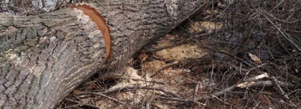 Турківський лісник, якого придавило деревом, прожив тиждень
