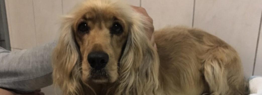 Львову бракує донорів крові для собак