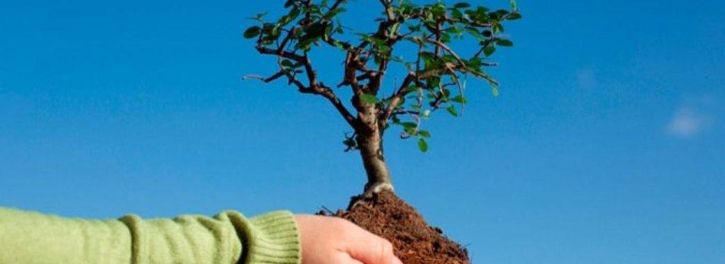 В Україні планують висадити 10 мільйонів дерев за тиждень