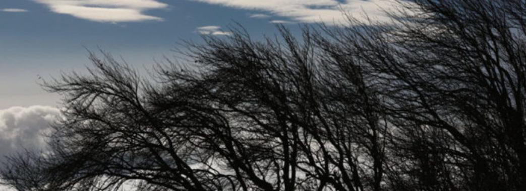Зірвані дахи, повалені дерева: рятувальники порахували, скільки лиха наробив буревій