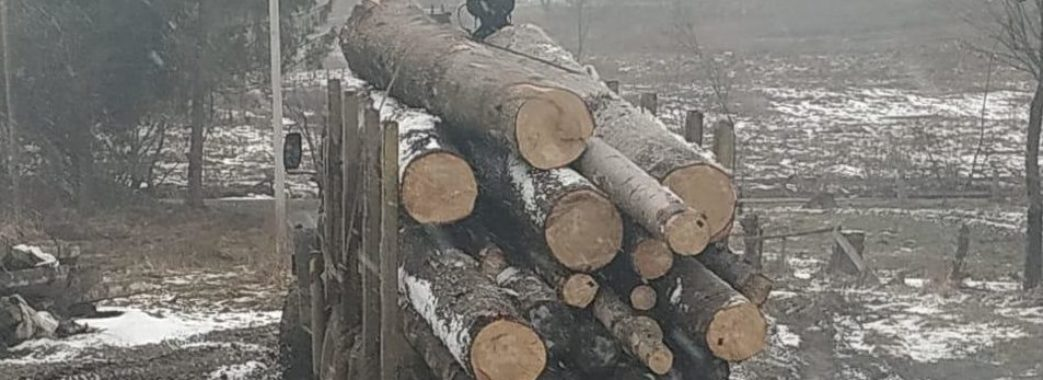 На Старосамбірщині знову вилучили понад півсотні незаконно зрубаних дерев