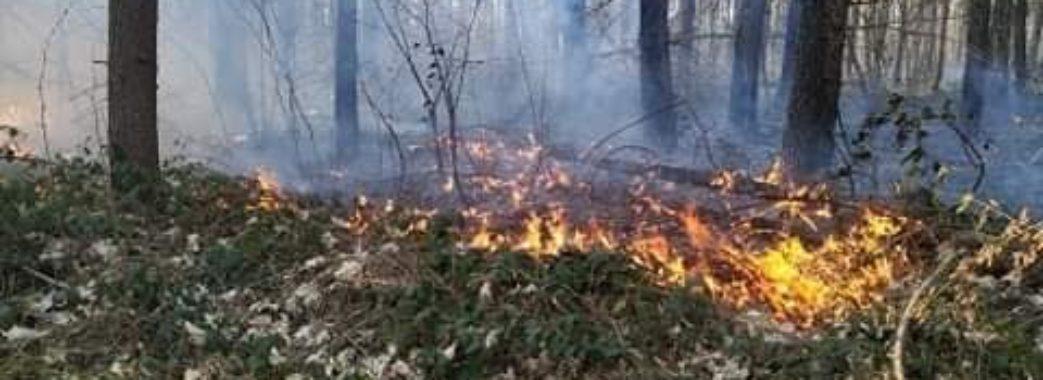 «Люди бачили, як утікала лисиця»: на Городоччині рятувальники на двох машинах гасили ліс (ВІДЕО)